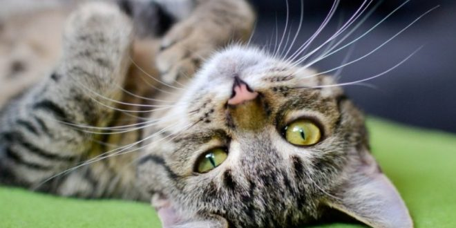 Cats language how to understand a cat
