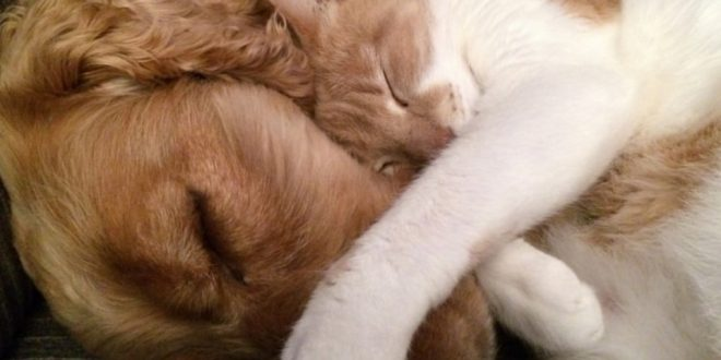 Dogs and cats how to make presentations