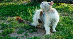 Natural pesticides for cats what to use