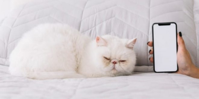 White cat characteristics meaning and race